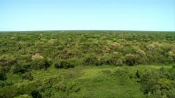Tajemná Brazílie – Divoký Pantanal (1/3)